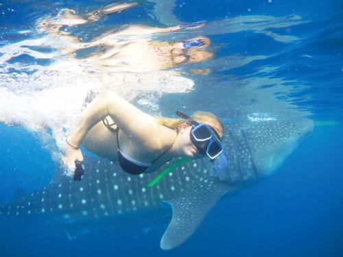 awesome_shot_-_oslob_whaleshark_encounter_-_cyan_adventures