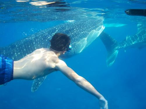 so_close_-_oslob_whaleshark_encounter_-_cyan_adventures